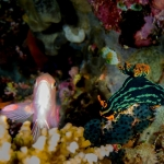 diving-verde-island-puerto-galera (4)