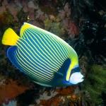 diving-verde-island-puerto-galera (8)