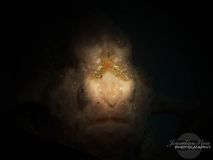 puerto-galera-scuba-diving (10)