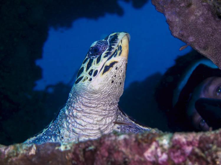 puerto-galera-scuba-diving (12)