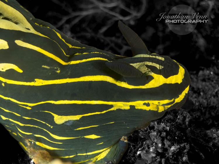 puerto-galera-scuba-diving (14)
