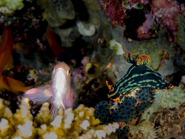 puerto-galera-scuba-diving (16)