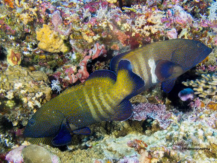 puerto-galera-scuba-diving (18)