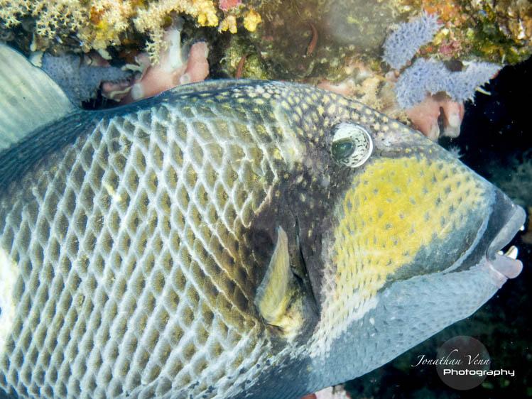 puerto-galera-scuba-diving (19)