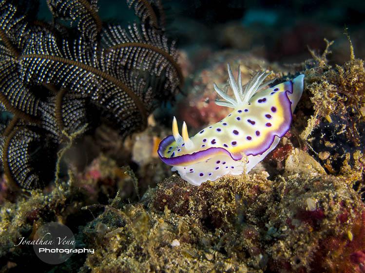 puerto-galera-scuba-diving (2)