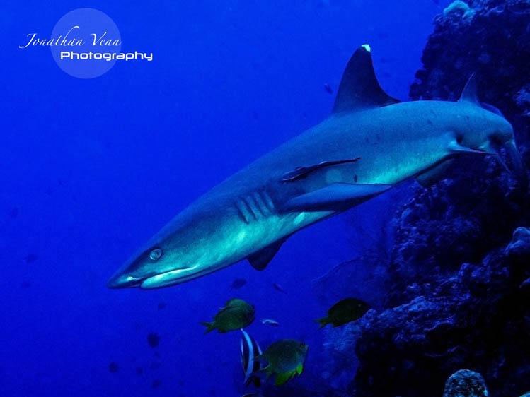 puerto-galera-scuba-diving (21)