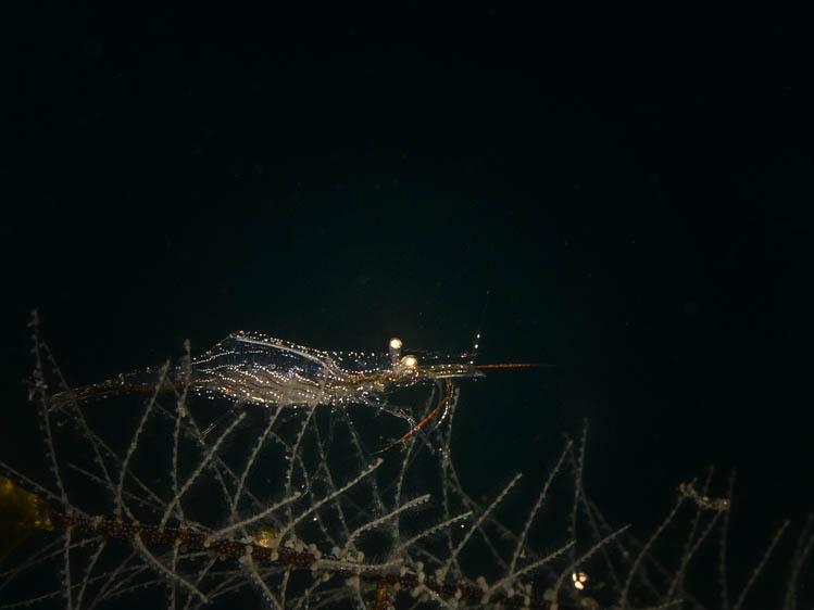 puerto-galera-scuba-diving (7)