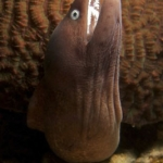 Moray Eel-Monkey-Beach