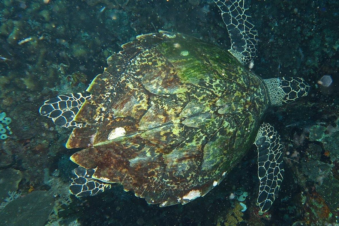 verde-island-scuba-diving-puerto-galera (2)