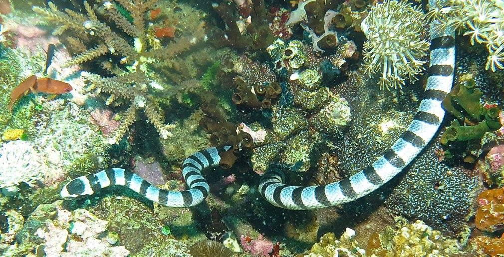 verde-island-scuba-diving-puerto-galera (8)