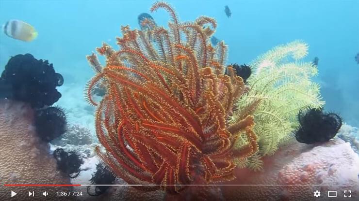 scuba diving puerto galera