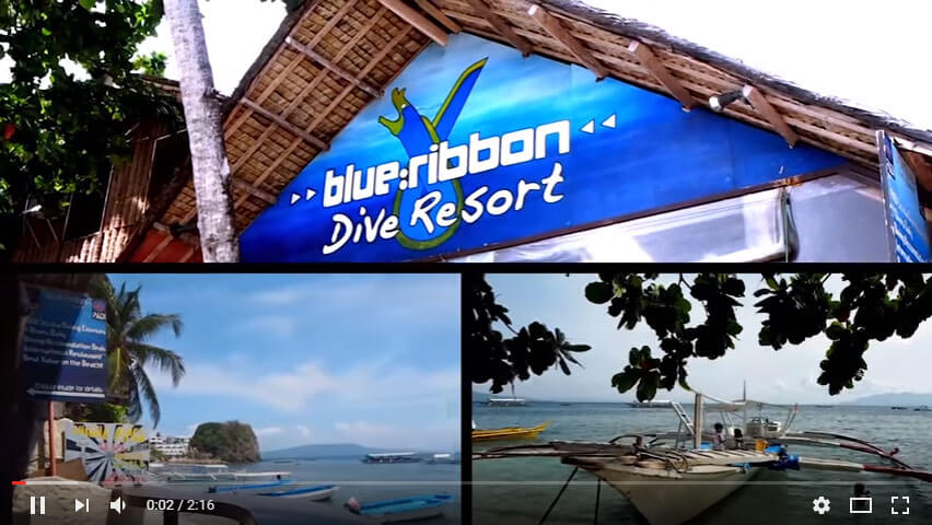 dugon wall dive site puerto galera