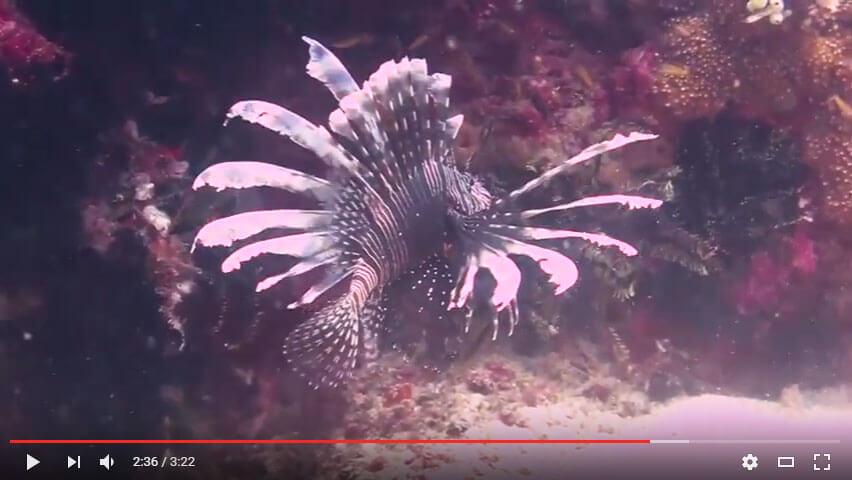 puerto galera scuba diving video june 7