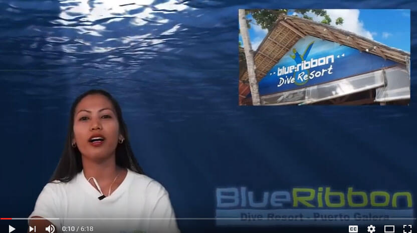 blue ribbon dive resort puerto galera newsletter