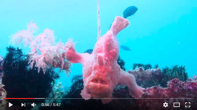 coral cove dive site puerto galera philippines