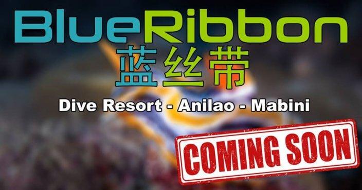 blue ribbon divers resort anilao philippines