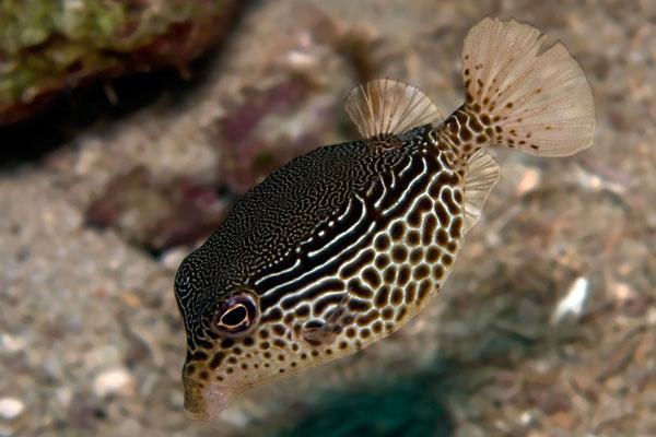 Boxfish-Hole in the Wall