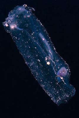 Jellyfish-Canyons