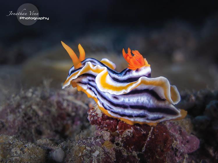 puerto-galera-scuba-diving (1)
