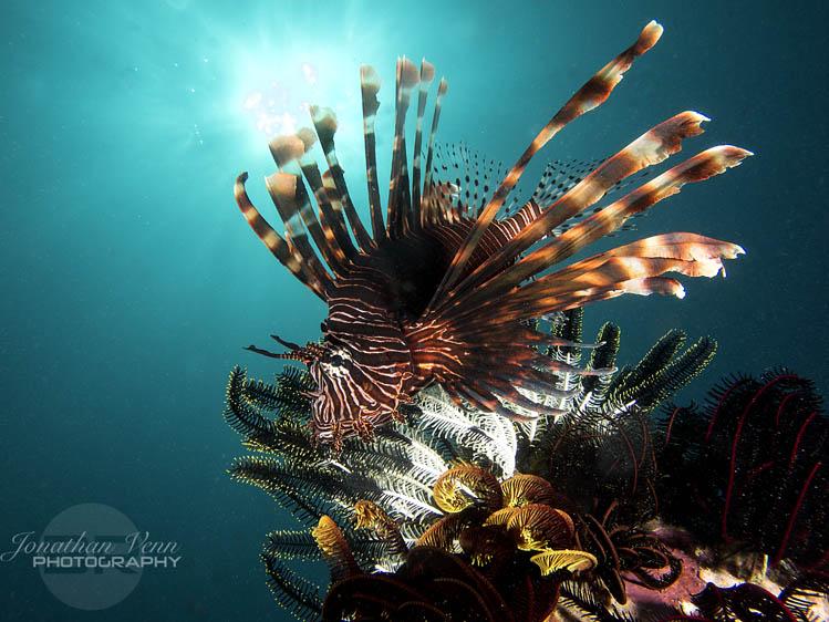 puerto-galera-scuba-diving (13)