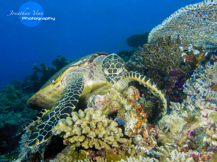 puerto-galera-scuba-diving (20)