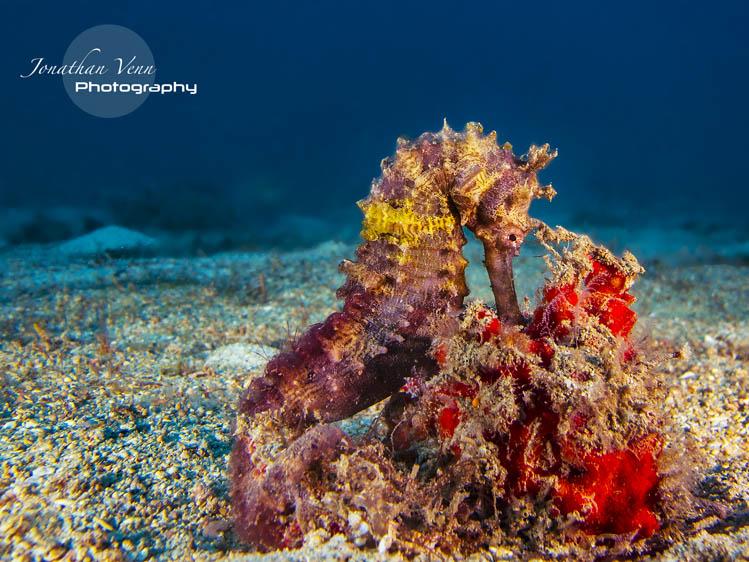 puerto-galera-scuba-diving (26)