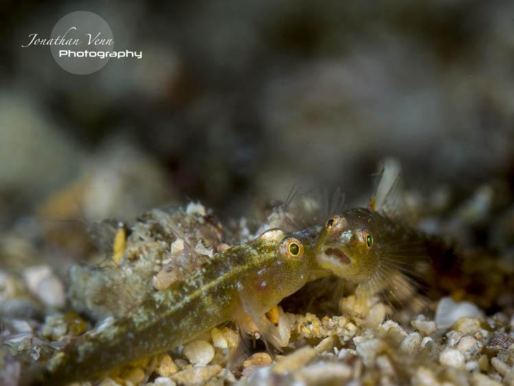 puerto-galera-scuba-diving (3)