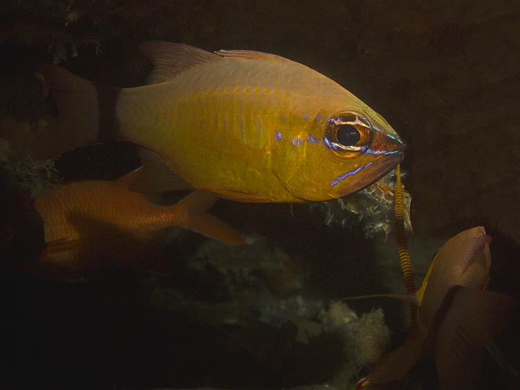 puerto-galera-scuba-diving (6)